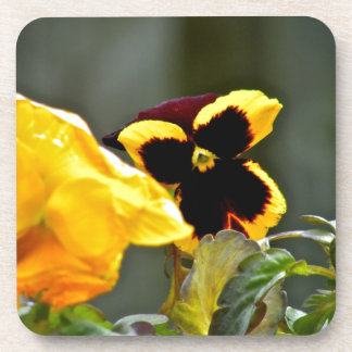 Pansy in the gardn beverage coaster