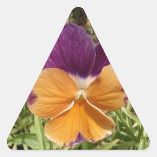 Pansy Jolly Joker Triangle Sticker