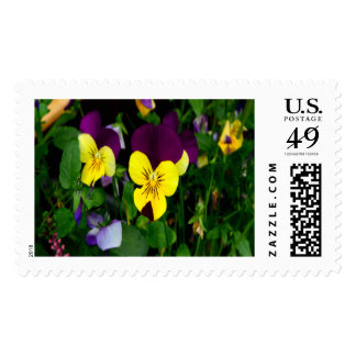 Pansy Large Postage Stamp