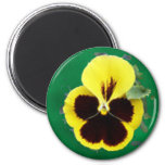 PANSY MAGNET REFRIGERATOR MAGNETS