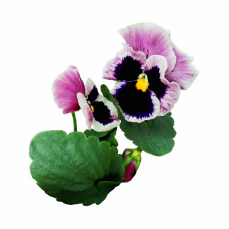 Pansy Mother and Child Photo Cutouts
