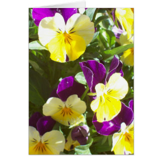 Pansy Patch Cards