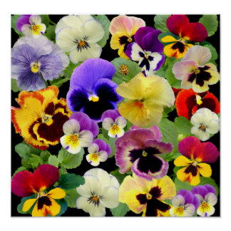 PANSY PATCHWORK PRINT POSTER