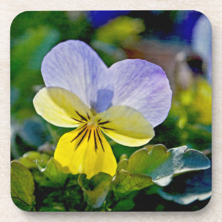 Pansy Perfection Coaster