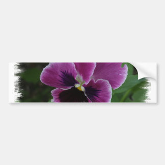 Pansy Pictures Bumper Sticker