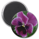 Pansy Pictures Round Magnet Magnet