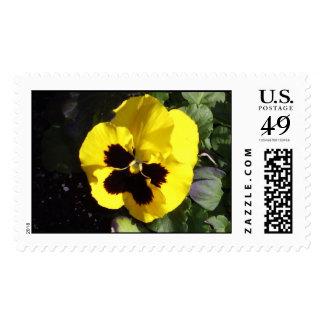 Pansy Portrait Postage Stamp