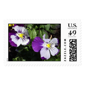 Pansy Portraits Postage Stamp