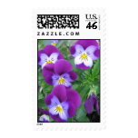 Pansy Postage Stamp