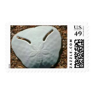 Pansy Shell Urchin (Echinodiscus Bisperforatus) Stamps