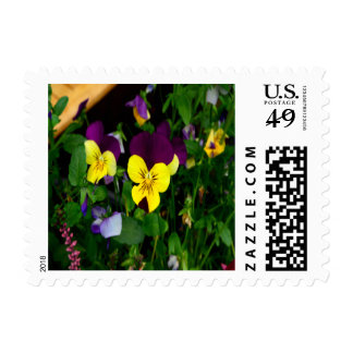 Pansy Small Postage