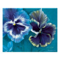Pansy study fine art floral poster print