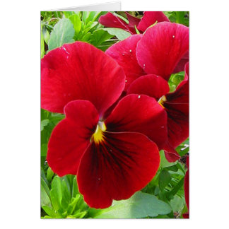 Pansy Thinking of You Card