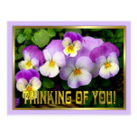 Pansy ~ Thinking of you ~ Postcard