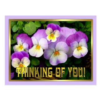 Pansy Thinking of you Postcard