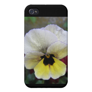 Pansy White and Yellow  Cover For iPhone 4