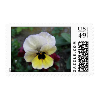 Pansy White and Yellow Postage Stamp
