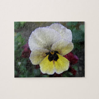 Pansy White and Yellow Puzzle