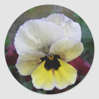 Pansy White and Yellow Sticker