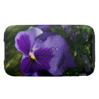 Pansy with Water Droplets iPhone 3 Tough Cover