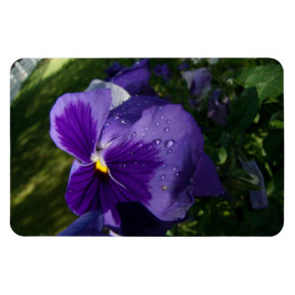 Pansy with Water Droplets Magnet