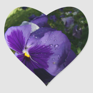 Pansy with Water Droplets Sticker