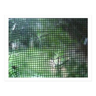 Pantalla rasgada de la ventana tarjetas postales