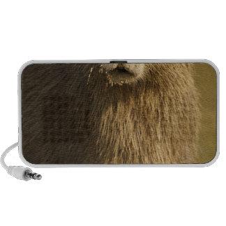 Pantanal, Brazil, Capybara, Hydrochoerus Laptop Speakers