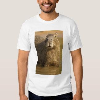 Pantanal, Brazil, Capybara, Hydrochoerus T Shirt