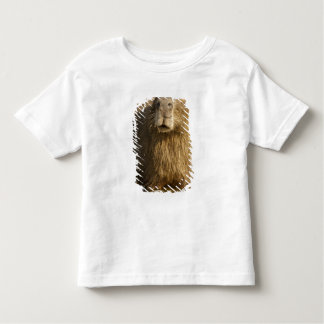 Pantanal, Brazil, Capybara, Hydrochoerus Tee Shirt