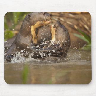 Pantanal NP, Brazil, Giant River Otter, Mouse Pad