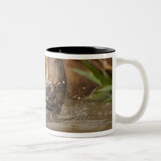 Pantanal NP, Brazil, Giant River Otter, Two-Tone Coffee Mug