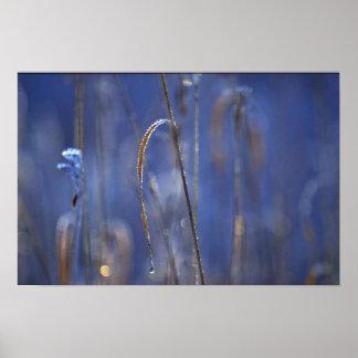 Pantano abstracto en el amanecer cubierto con esca impresiones