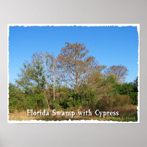 Pantano de la Florida Cypress con los cielos azule Póster
