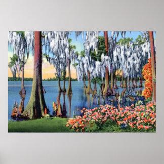 Pantano de País de Gales la Florida Cypress del la Impresiones