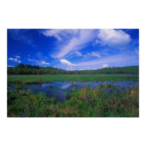 Pantano de Washington de la montaña de octubre Póster
