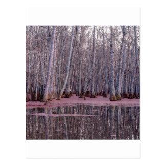 Pantano del invierno de los árboles de la postal