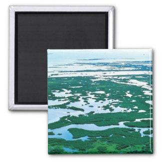 Pantano del mangle en la Florida Imán De Nevera