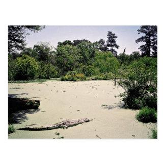 Pantano (pantano), Luisiana, los E.E.U.U. Tarjetas Postales