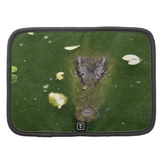 Pantano verde del cocodrilo planificador