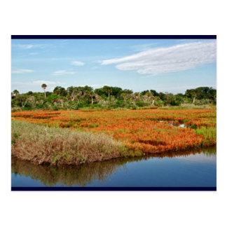 Pantano vibrante de la caída, la Florida Postales