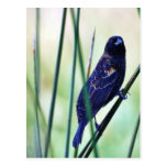 Pantanos de los pájaros postales