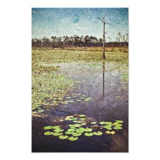 Pantanos grandes de la rama en Luisiana Cojinete
