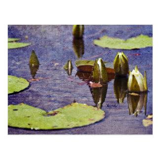 Pantanos grandes de la rama tarjeta postal