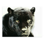 Pantera negra de Jaguar Tarjetas Postales
