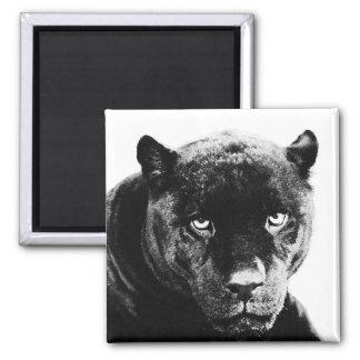 Pantera negra Jaguar Imán Cuadrado