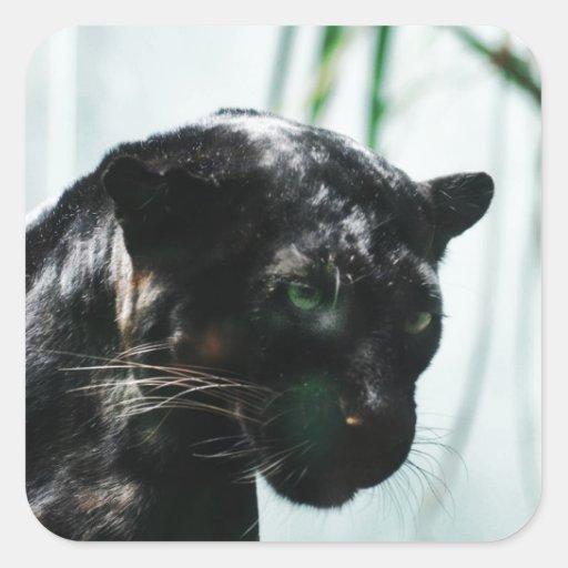 Pantera negra magnífica pegatina cuadrada