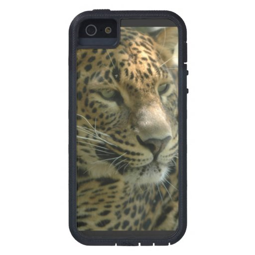 Panteras iPhone 5 Carcasas