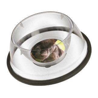 panther-8.jpg pet bowl