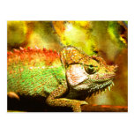 Panther chameleon Digital art Post Card